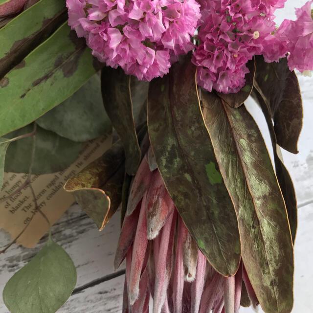 花材 プロテア ピンクアイス 2本 ドライフラワー ハンドメイドのフラワー/ガーデン(ドライフラワー)の商品写真