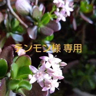 テンモン様専用ページ(その他)