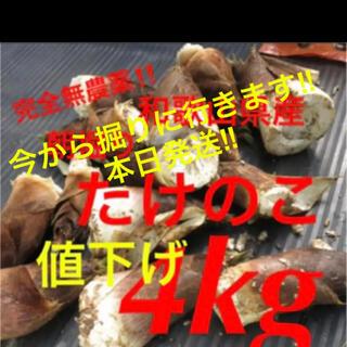 本日収穫→本日発送‼️たけのこ★無農薬★和歌山産★4キロ
