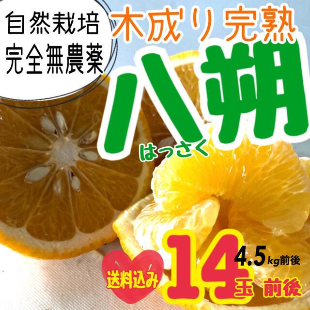 送料込み【無農薬】八朔 80サイズ 食品/飲料/酒の食品(フルーツ)の商品写真