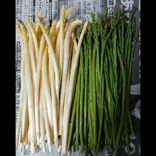 佐賀県産極細ホワイト&グリーンアスパラ1.8キロ(訳あり)(野菜)