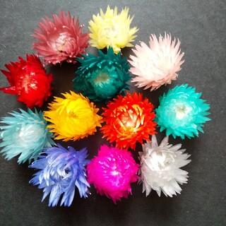 シルバーデイジーヘッド 12色 ドライフラワー ハーバリウム花材(ドライフラワー)