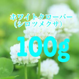 ホワイトクローバー、シロツメクサの種 100g 20平米分。芝生、雑草対策に!(その他)
