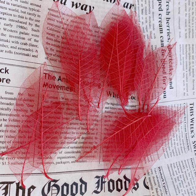 【花材】スケルトンリーフ レッド系 ハンドメイドのフラワー/ガーデン(ドライフラワー)の商品写真