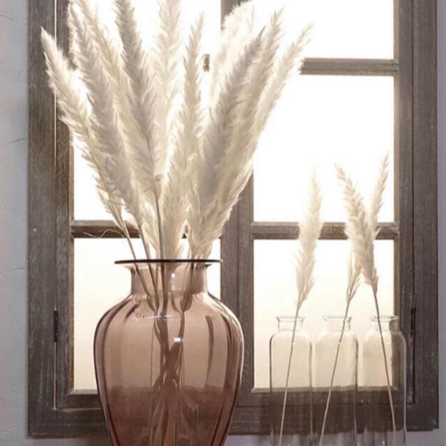 Francfranc(フランフラン)の【即発送】ホワイトパンパスグラス💫10本セット ハンドメイドのフラワー/ガーデン(ドライフラワー)の商品写真