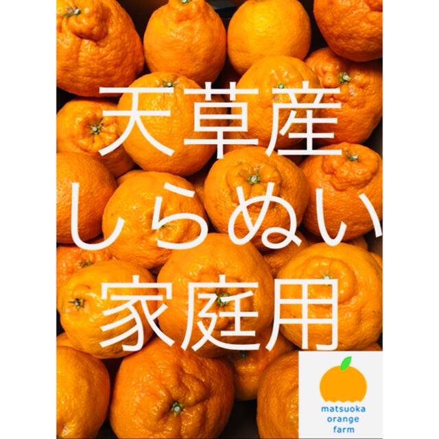 不知火 家庭用 5kg  食品/飲料/酒の食品(フルーツ)の商品写真