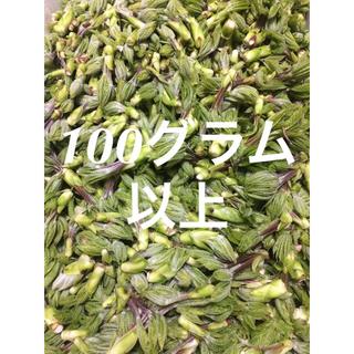 山形県産 天然山菜 こしあぶら 100グラム以上