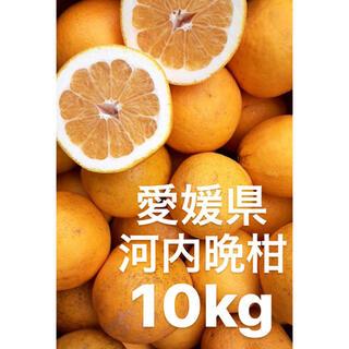 愛媛県 宇和ゴールド 河内晩柑 10kg