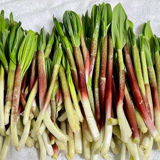 道北産 天然行者にんにく 新芽 1kg 予約販売(野菜)