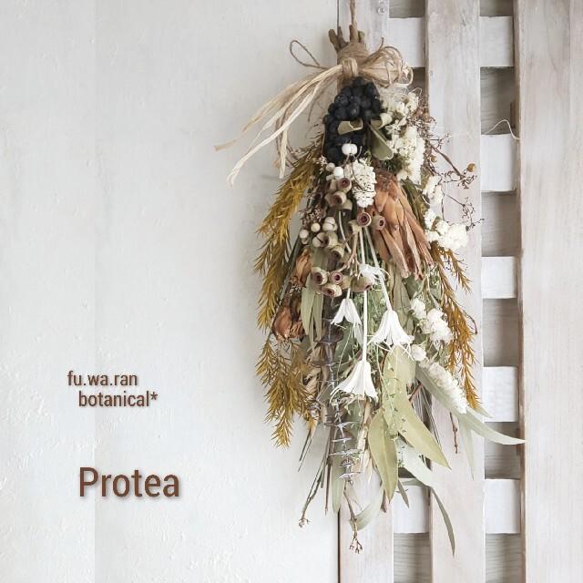 *専用*プロテア&アンバーナッツ  ドライフラワースワッグ ハンドメイドのフラワー/ガーデン(ドライフラワー)の商品写真