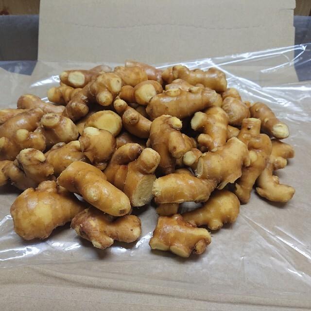 生姜(小粒)(愛知県産小生姜) しょうが 辛口 食品/飲料/酒の食品(野菜)の商品写真