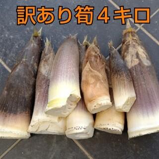 訳あり  傷あり  タケノコ  たけのこ  筍  竹の子  無農薬  野菜