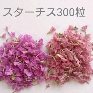 No.9 ドライフラワー スターチス300粒(ドライフラワー)