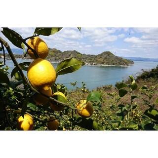 peaceful様専用 無農薬!特別栽培レモン2.8キロ(フルーツ)