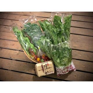 産地直送新鮮野菜と名古屋コーチンたまごの詰め合せ 3~4名様分 4/22出荷分(野菜)