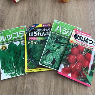 バジル ルッコラ ほうれん草 ラディッシュ 種(野菜)