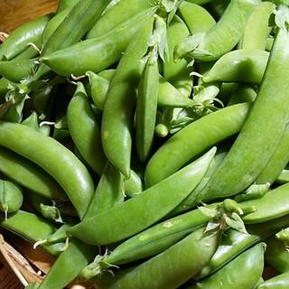 九州産 スナップえんどう 500g 無農薬 無化学肥料  (野菜)