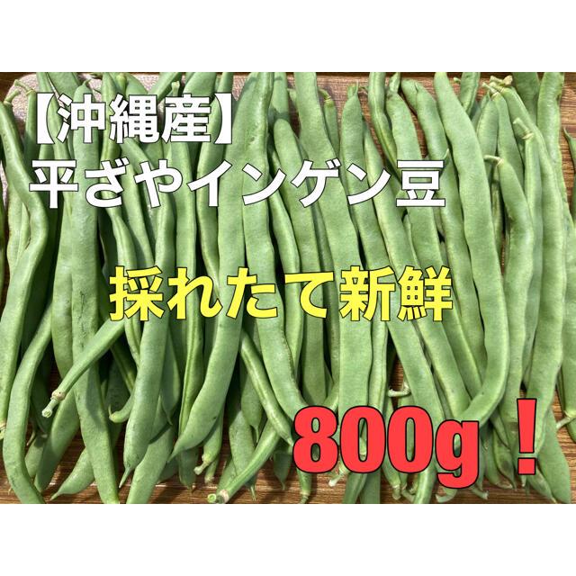 早い者勝ち!沖縄産 平ざやインゲン豆 800g 採れたて 新鮮 食品/飲料/酒の食品(野菜)の商品写真