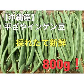早い者勝ち!沖縄産 平ざやインゲン豆 800g 採れたて 新鮮(野菜)