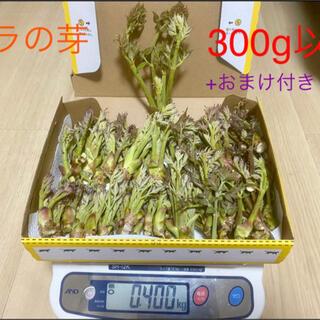 天然!山梨県産!タラの芽300g以上(野菜)