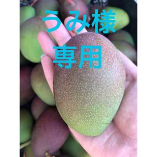 【うみ様専用】グリーンマンゴー(フルーツ)