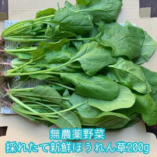無農薬野菜*採れたてほうれん草*約200g*新鮮で柔らかい‼︎*ネコポス*(野菜)