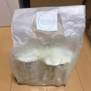 爆産植菌カワラ材L/Mサイズ2本入り2袋(虫類)
