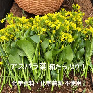 アスパラ菜 コンパクトボックス(野菜)