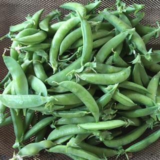 熊本県八代産 農薬不使用 さやえんどう 500グラム(野菜)