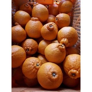 香川県産 デコポン不知火 柑橘 みかん 5キロ(フルーツ)