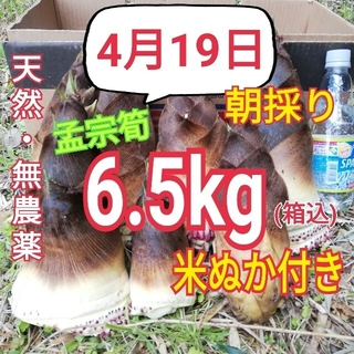 4/19採れたて 筍【安全安心】天然・無農薬たけのこ6.5㎏【福島県産】タケノコ
