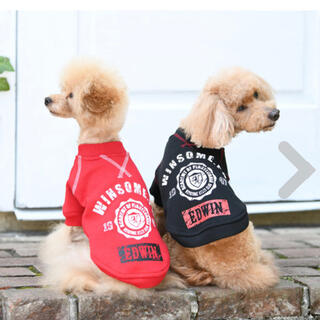 エドウィン(EDWIN)のhana様専用。黒L 新品 犬服 EDWIN(エドウィン)ロゴスウェット(犬)