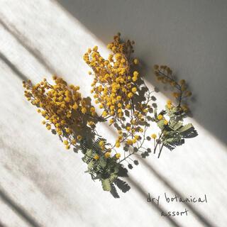 ドライボタニカル / ミモザ ドライフラワー  花材 22本(ドライフラワー)