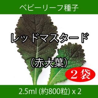 ベビーリーフ種子 B-33 レッドマスタード(赤大葉) 2.5ml x 2袋(野菜)