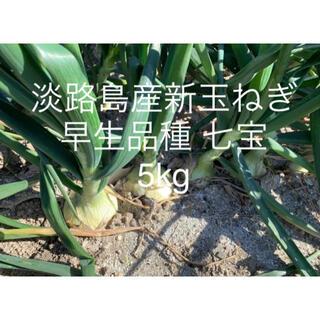兵庫県 淡路島産 令和3年 新玉ねぎ5kg 早生品種 七宝 たまねぎ20個前後(野菜)