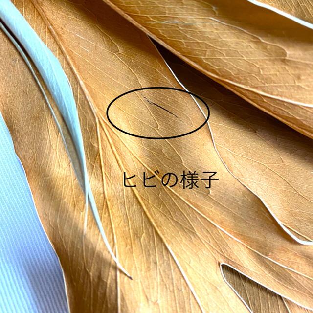 【在庫僅か】人気商品グレビレアゴールド(ドライフラワー)5本 ハンドメイドのフラワー/ガーデン(ドライフラワー)の商品写真