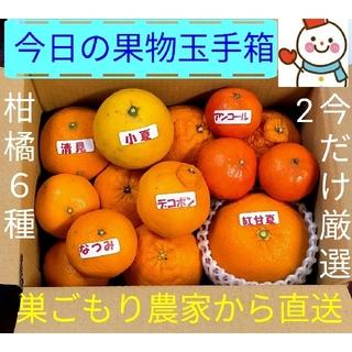 ラクマ価格で今日の果物玉手箱♥旬の柑橘6種です♥巣ごもり農家雪だるまから