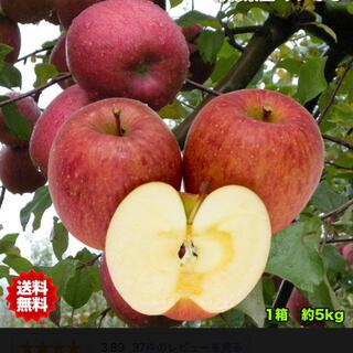 りんご 5kg(野菜)