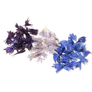矢車草の花びら ミックス ブルー系3色 ドライフラワー ナチュラル W(ドライフラワー)