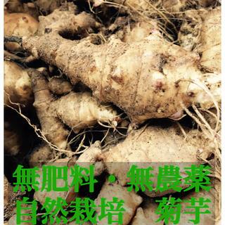 【1kg〜】無肥料 無農薬 菊芋 自然栽培 自然農 取れたけ 新鮮 種芋 健康(野菜)