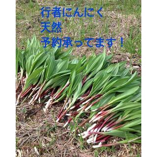 行者にんにく 天然 500g 明日収穫(野菜)