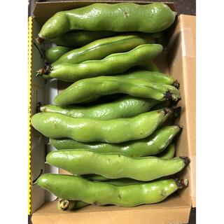鹿児島県そら豆800g  (野菜)