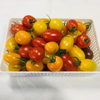 カラフルミニトマト7kg(野菜)