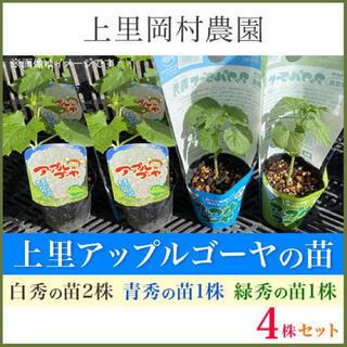 41961【白2青1緑1】上里岡村農園寅さんのアップルゴーヤ苗4本セット(野菜)