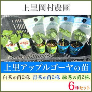 41962【白2青2緑2】送料込み!寅さんのアップルゴーヤ苗3色6株セット(野菜)