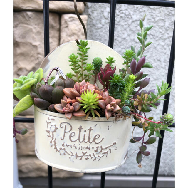 多肉植物❤︎寄せ植え❤︎このまま飾れます♪ ハンドメイドのフラワー/ガーデン(その他)の商品写真