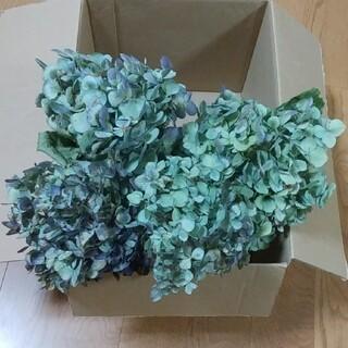 【ことりっぷ様確認用】アジサイドライフラワー 青緑~緑青 紫茎4(ドライフラワー)