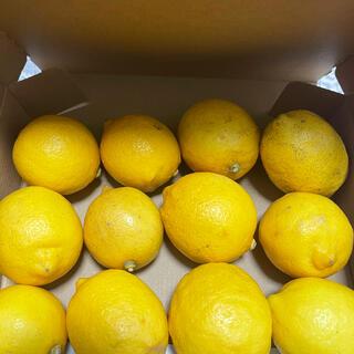 愛媛レモン