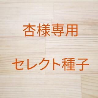 杏様専用 セレクト種子 2袋(野菜)