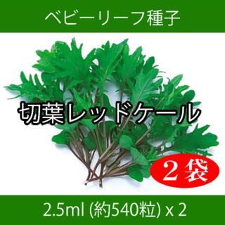 ベビーリーフ種子 B-37 切葉レッドケール 2.5ml 約540粒 x 2袋(野菜)